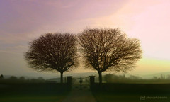 find your own way ... (photos4dreams) Tags: twin trees gate gatter landschaft landscape mist morning nebel morgen photos4dreams p4d photos4dreamz friedhof hummetroth