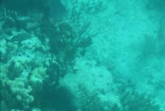 19. John Pennekamp glass bottom boat (Misty Garrick) Tags: johnpennekamp johnpennekampreef johnpennekampcoralreefstatepark coralreef florida keylargofl keylargo floridakeys atlanticocean