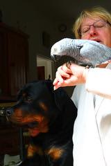 IMG_8900 (huygenz) Tags: anet huygenz papagai parrot 2pinterest
