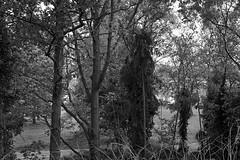 Van Raemdonckpark, Kortrijk (bm^) Tags: trees urban blackandwhite bw white black tree nature night zeiss bomen nikon belgium belgique zwartwit belgi boom westvlaanderen carl van zwart wit parc stad kortrijk blackwhitephotos planart1450 d700 zf2 planar5014zf nikond700  westernflanders raemdonckpark