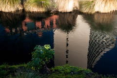 Reflections of a City (Jocey K) Tags: city newzealand christchurch plants water reflections river avonriver