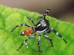 Spider (Dis da fi we) Tags: spider puntagorda toledo belize hickateebelize hickateepuntagorda jungle rainforest forest wildlife culture cottages hickatee