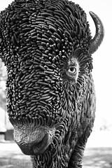 Tatonka (Cochran.Photo) Tags: blackandwhite sculpture canon photography eos northdakota bismarck tatonka canonphotography canon6d canonfullframe fullframephotography beyett cbeyettphoto
