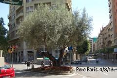 130804 034 (chausson bs) Tags: barcelona rboles arbres olivo olivera