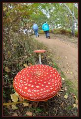 Woodland Walk (Full Moon Images) Tags: wood nature mushroom woodland walking fly hiking walk wildlife sandy bedfordshire reserve lodge fungus toadstool agaric thelodge rspb