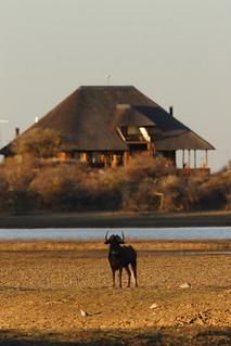 Namibia Safari - Lake Lodge 2