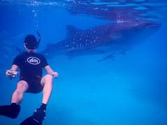 Swimming with Whale Sharks (Mark Obusan) Tags: swimming james greg philippines snorkling cebu whaleshark gregory gj rhincodontypus butanding oslob tanawan