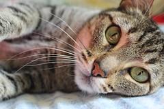 IMG_0257 (Carol_yn) Tags: cute cat greeneyes