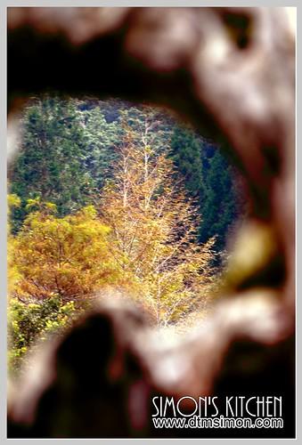 明池森林遊樂區03-3.jpg