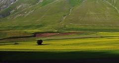 Castelluccio  Explore (Giuliana 57) Tags: panorama pano explore panoramica umbria castelluccio sibillini prateria lenticchie montisibiliini nikond5200 giulana57 giulianacastellengo
