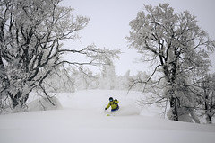 (yatti(._.)) Tags: mountain snow ski japan powder hakkoda telemark 八甲田