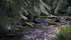 Nelson Falls Track
