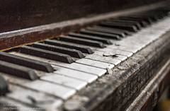 The Sound of Silence (photoMakak) Tags: canada abandoned canon quebec decay montreal urbandecay piano urbanexploration ncc derelict ue 6d urbex abandonné urbanexplorer canon6d negrocommunitycenter canonef40mmf28stm photomakak