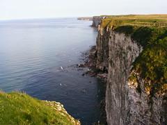 Bempton Cliffs (mike_j's photos) Tags: cliff rspb bempton