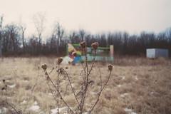 It's Been a Long Time (H o l l y.) Tags: winter color abandoned film field analog 35mm vintage landscape cool lomography alone ride pentax retro indie cernival