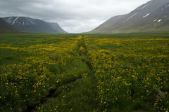 (giuli@) Tags: color colour digital iceland colore westfjords islanda flateyri giuliarossaphoto noawardsplease nolargebannersplease korpudalur fujinonxf18mmf2r fujifilmxe1