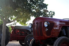 IMG_0372 (ACATCT) Tags: old espaa tractor spain traktor agosto toledo antiguo massey pistacho tembleque barreiros 2015 bustards perdices liebres avutardas ff30ds r350s
