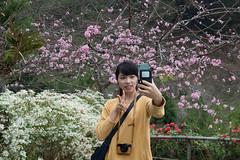 DSC_1190 (chenjn) Tags: d600 nikon 2470mm 妖怪村 柳家梅園 taiwan 信義鄉 梅花