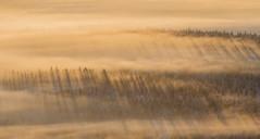 Misty Forest (Jyrki Liikanen) Tags: lapland lappland lappi ylläs landscape landscapecapture mistylandscape fog foggy foggylandscape mist forest sunbeams northernfinland north arcticweather snowytrees snowyscenery snowylandscape