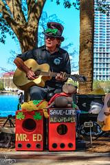 Mr. Ed - Save A Life: Adopt A Pet (MsAdemarro) Tags: mred lakeeola orlando savepets music adoptpets guitar