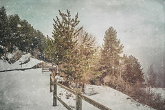 Spring Snow (Ro Cafe) Tags: andorra engolasters snow pines trees spring march fence textured nature landscape nikkor2470f28 nikond600