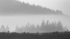 Fov Fog