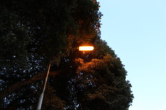 Dayburner (doojohn701) Tags: philips sodium oxide lampost tree vegetation uk light sky dayburner
