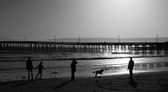 Family Dog (Joe Josephs: 3,166,284 views - thank you) Tags: beach beaches california californiacoast coastal coastline landscape landscapephotography pacificcoasthighway pacificocean shoreline travel travelphotography joejosephs outdoorphotography people photojournalism â©joejosephs2017 dogs ©joejosephs2017 familly photojournalsim blackandwhitephotography blackandwhite cayucos californiacentralcoast californiabeaches californialandscape