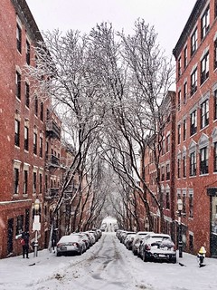 Snowy Trees in Boston