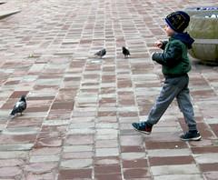 Feed the Birds 1 (CameraCat.) Tags: poland krakow cracow canon canon550d candid colour city birds boy street
