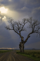 DSCF2721 atkins tree storm (snolic...linda) Tags: arkansas 501 fujixt2 morrilton farm storm cloud atkinsbottom atkinsbottomtree mtnebo lonetree tree cottonwoodtree petitjean tornado weather clouds