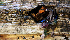 Hole (jennyh195) Tags: wood rot nature panel hole decay shed fabric photograph rotten eroded escaping nibbled