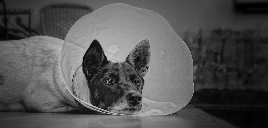 Best Medication For Dog Sickness