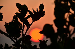 Sunset through the flowers (Rabican7) Tags: aegina sunset flowers colorful colors greece island