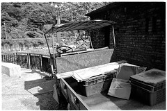 Image0014b (herchong) Tags: leica cat taiwan rangefinder m v3 rf  elmarit streetcats 28mmf28 2828  fujicolor100