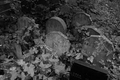 (John Donges) Tags: england blackandwhite london cemetery headstones gravestones stokenewington abneyparkcemetery 7184