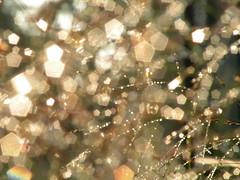 Glitter N' Sunlight (Sapphire Dream Photography) Tags: light wild sunlight nature grass sparkles glitter silver gold lights golden morninglight worship dof treasure bokeh background rich seed slide christian diamond seeds sparkle foliage creation dew backgrounds grasses jewels slides powerpoint treasures morningdew jewel 43 bedazzled riches bedazzle powerpoints graminoid worshipbackgrounds worshipbackground easyworship propresenter seededgrass freeworshipbackgrounds graminiods