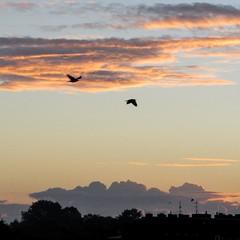 This morning (mona_dee) Tags: roof sky bird rooftop birds sunrise germany himmel roofs vgel dach sonnenaufgang kiel gaarden vogel schleswigholstein dcher