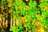 Flores (Focalizate) Tags: seca tqm mariphotos
