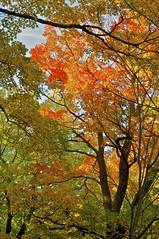 Plaisirs d'automne au mont Royal (Pierre Éthier) Tags: paix méditation treesubject d300s nikond3oos