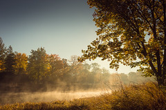 More mist (SauceyJack) Tags: morning november autumn trees sky plants mist lake plant color fall nature water ecology grass leaves landscape early leaf illinois scenery colorful earlymorning scenic meadow atmosphere sunny il ill pasture bark vegetation grasses marsh growing botany meadowlake lisle mortonarboretum dupagecounty 35l 2013 lightroom5 canon1dx sauceyjack