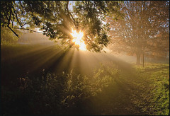 November Morning (zolaczakl) Tags: november trees mist grass sunshine sunrise bristol meadow flare rays openspace blaise parkland blaisecastleestate henbury 2013 nikond90 photographybyjeremyfennell