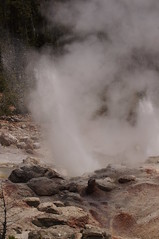 Steamboat Geyser (Tjflex2) Tags: trip travel vacation usa holiday nature beautiful yellowstonenationalpark historical wyoming volcanic geothermal hotsprings protected volcanism norrisgyserbasin