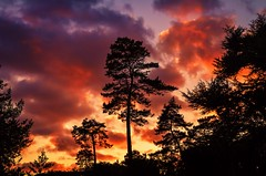 red sky at night (Jez22) Tags: trees light sunset red england sky copyright orange abstract color art nature beautiful silhouette night clouds dark landscape evening countryside kent twilight colorful bright outdoor dusk background scenic vivid scene norton glowing provender jeremysage
