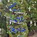 Trees_of_Loop_360_2013_040