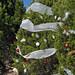 Trees_of_Loop_360_2013_199