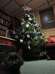 Outtakes from Marty Kitty photo shoot (rightthewrong) Tags: christmas new xmas white mountains tree cat living washington kitten december mt room kitty peak nh hampshire presidential dec mount observatory summit marty range obs mwo presidentials 2013