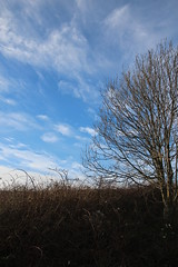 Tree and Sky (tim.clarke37) Tags: clouds downs sussex lane fields downland sompting halewick
