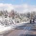 Neve no Parque Natural do Alvão-3