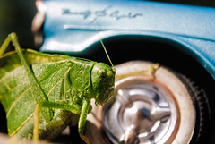 Katydid with Oldsmobile